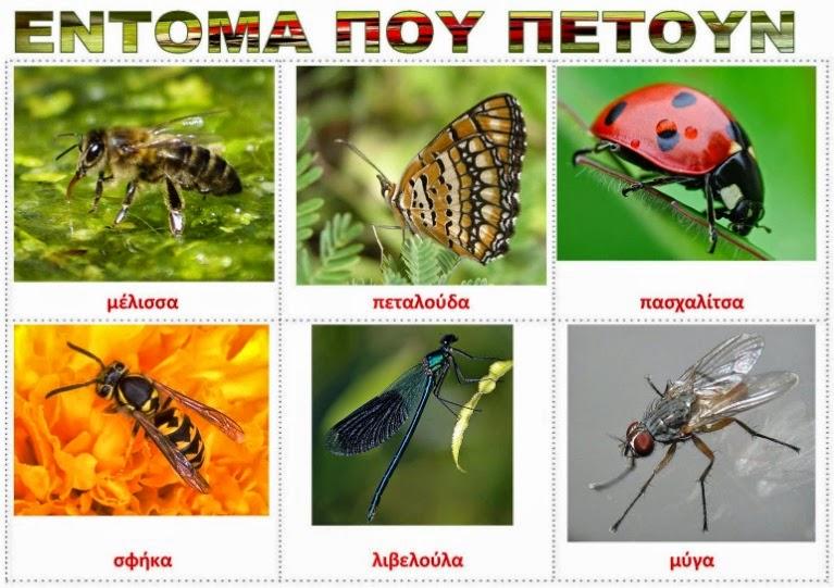 insekte-qe-fluturojne