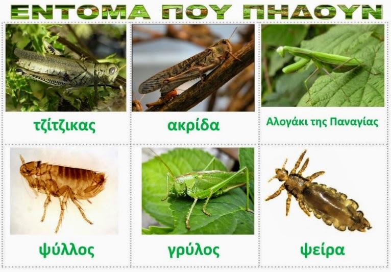 insekte-qe-kercejne