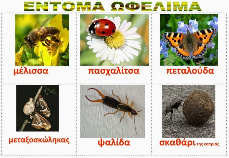 insekte-te-dobishme